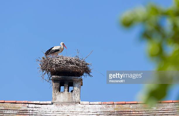 Austria, Burgenland, Rust, Stork with nest on roof top