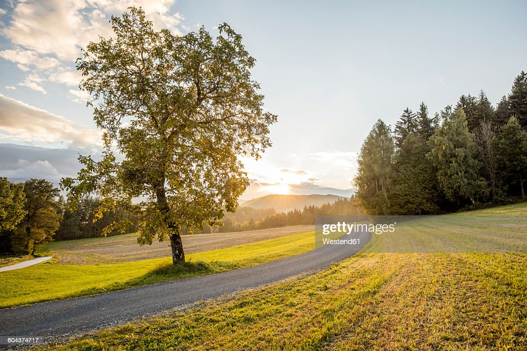Austria, Carinthia, Ludmannsdorf, country road, forest in autumn, against the sun