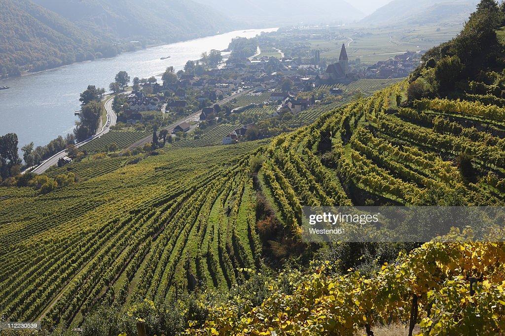 Austria, Lower Austria, Waldviertel, Wachau, Weissenkirchen, Achleiten, View of Vineyard  and Danube river