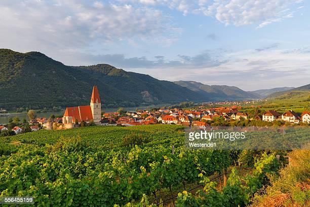 Austria, Lower Austria, Waldviertel, Weissenkirchen in der Wachau, vineyard
