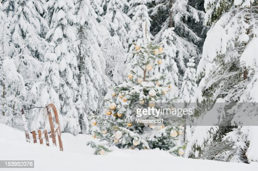 Austria Salzburg County Christmas Tree And Sledge In Snowy