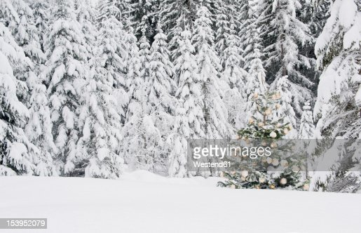 Austria Salzburg County Christmas Tree In Snow Stock Photo