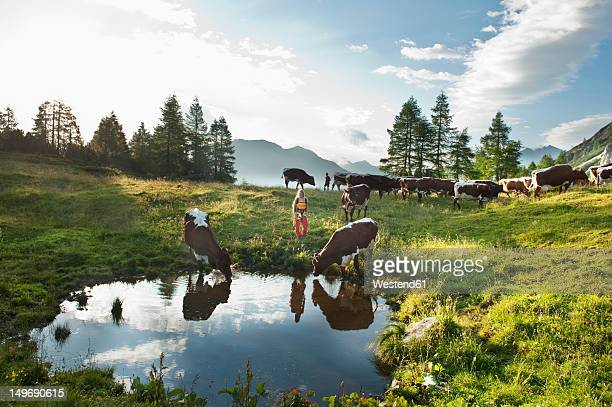 Austria, Salzburg County, Woman and boy standing in alpine meadow with cows