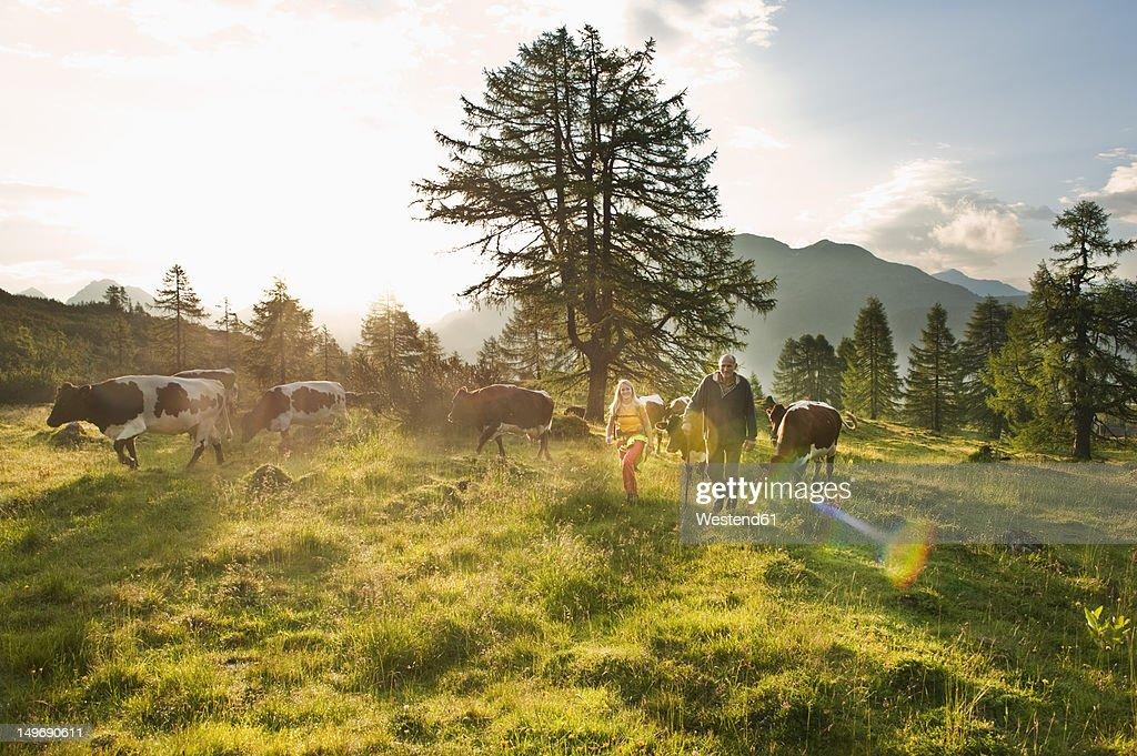 Austria, Salzburg County, Woman and farmer walking in alpine meadow with cows