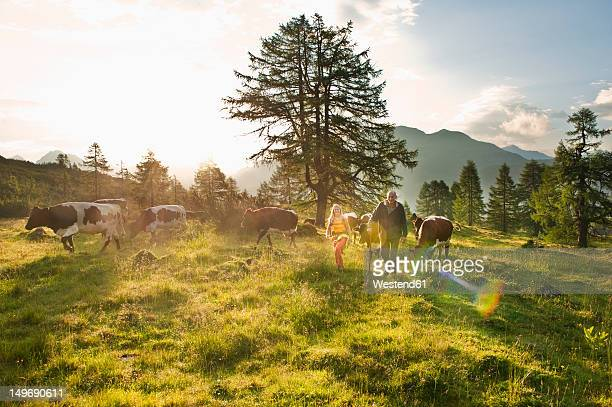 Austria, Salzburg County, Woman and farmer walking in alpine meadow with cows