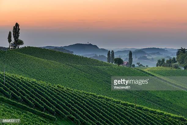 Austria, Styria, vine route, vineyard at sunset