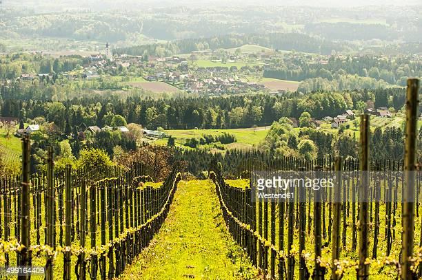 Austria, Styria, Western Styria, Deutschlandsberg, view to grapevines and valley