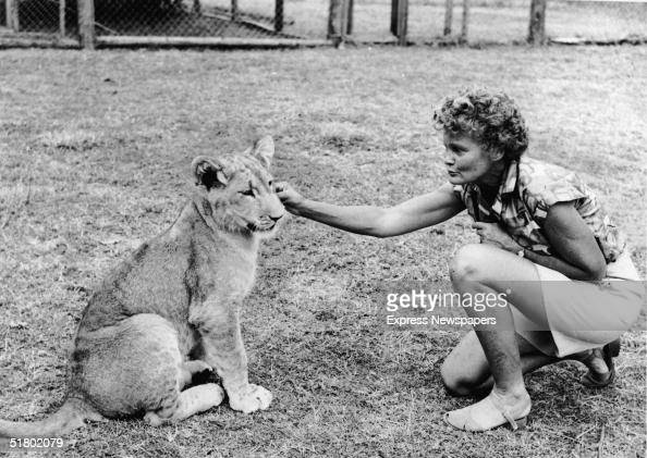 Austrianborn Kenyan conservationist and author Joy Adamson kneels and scratches the face of the lioness Elsa whom she raised Adamson wrote about her...
