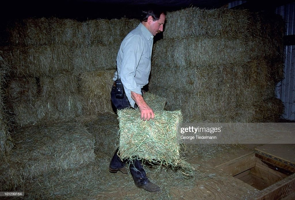 Portrait Dale Earnhardt carrying bales of hay. Mooresville, NC