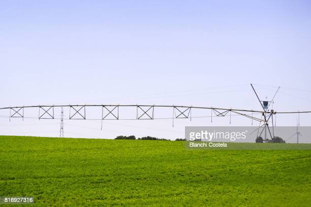 Automatic irrigation in the field in spring