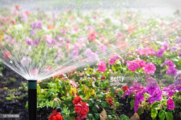 Automatic Sprinkler Watering Flowers