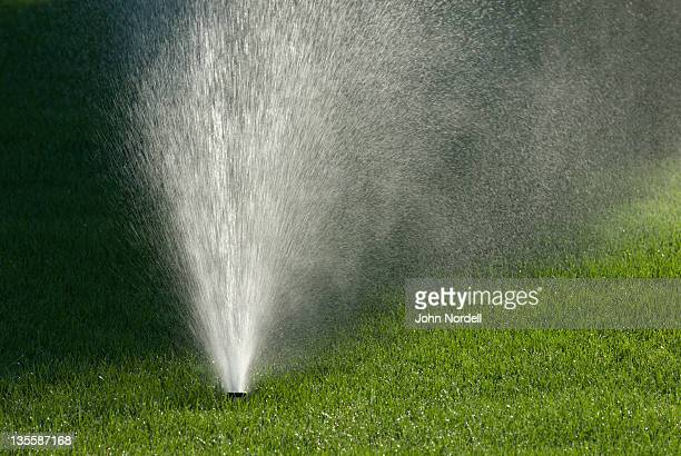 Automatic sprinkler watering lawn in the morning sun