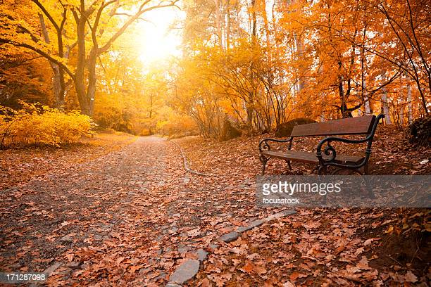 Autumn a park bench in Hungary