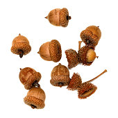 Autumn dry acorns of oak isolated on white background. View from above.