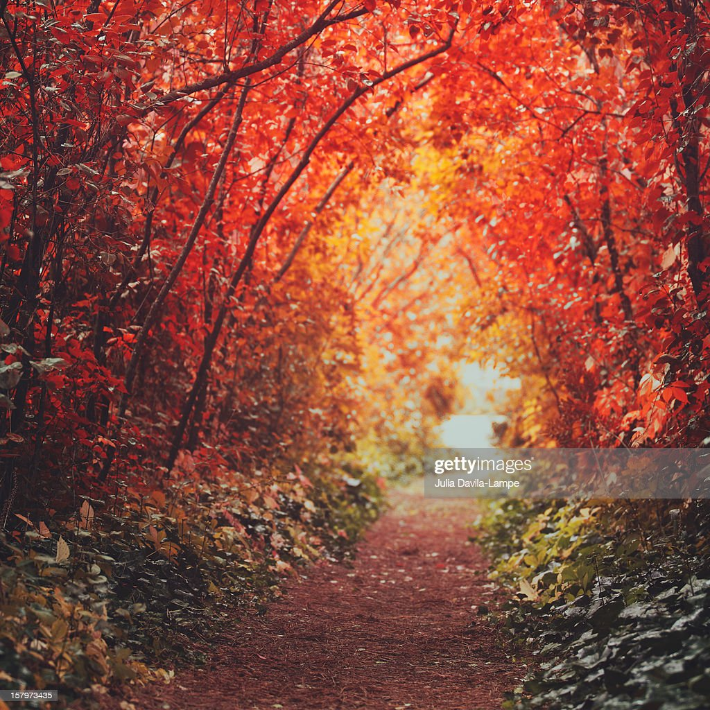 Autumn alley-path : Stock Photo