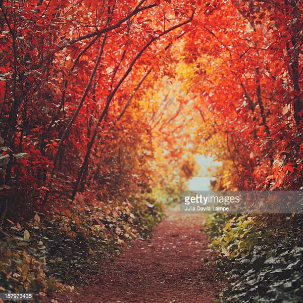 Autumn alley-path