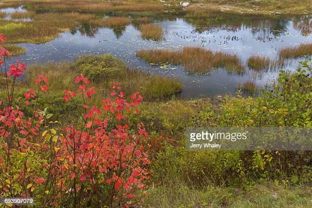 Autumn along Duck Brook Road, Acadia National Park