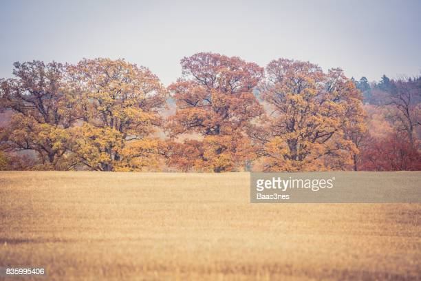 Autumn and trees changing colors