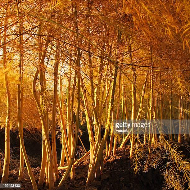 Autumn Asparagus Forest