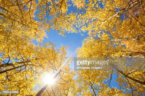 秋のアスペンの太陽