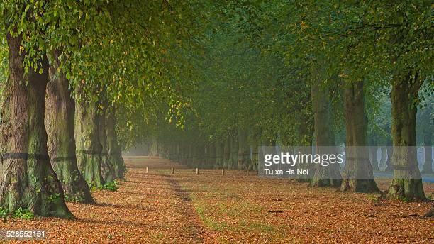 Autumn at Clumber Park, Nottinghamshire, England