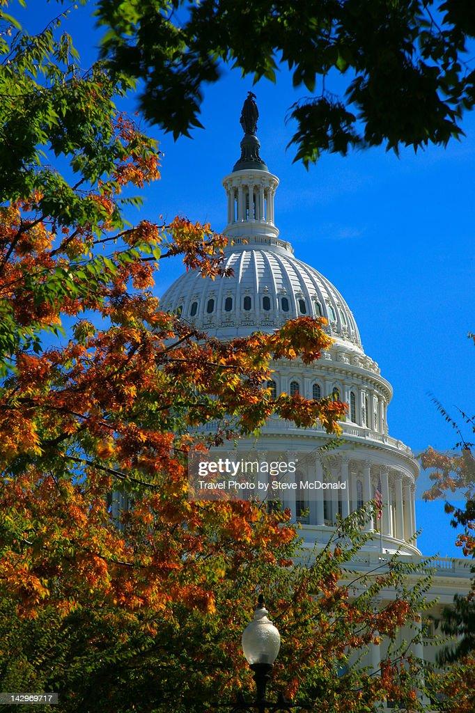 Autumn at Senate : Stock Photo