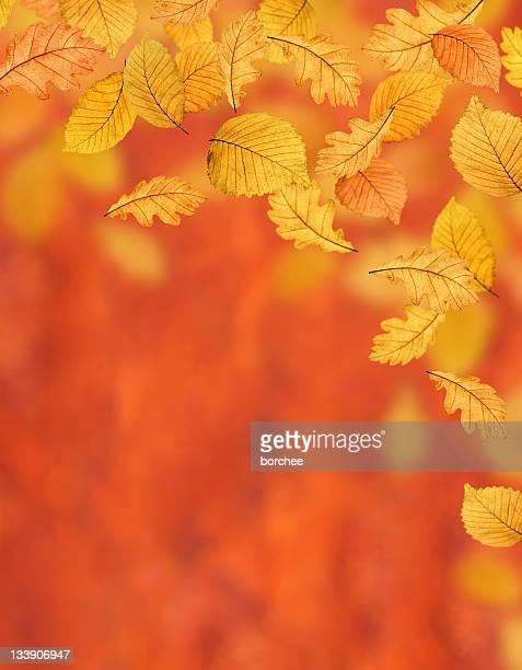 Autumn Background (XL)