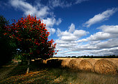 Autumn Bales