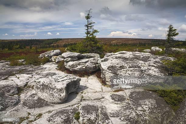 Autumn, Bear Rocks Preserve, Dolly Sods Wilderness
