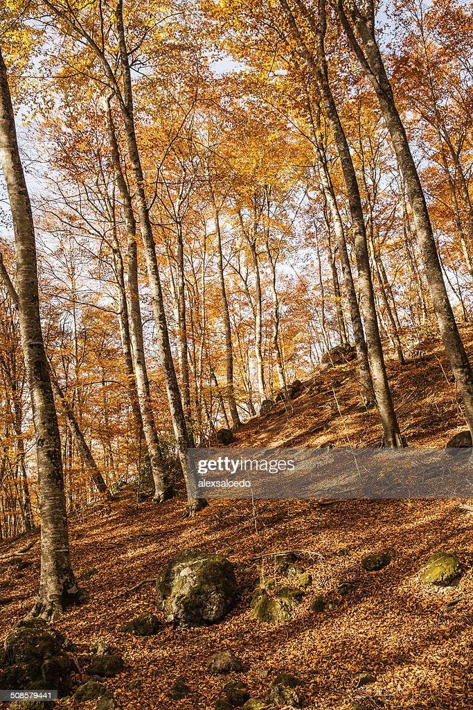 Autumn ミヤマ : ストックフォト