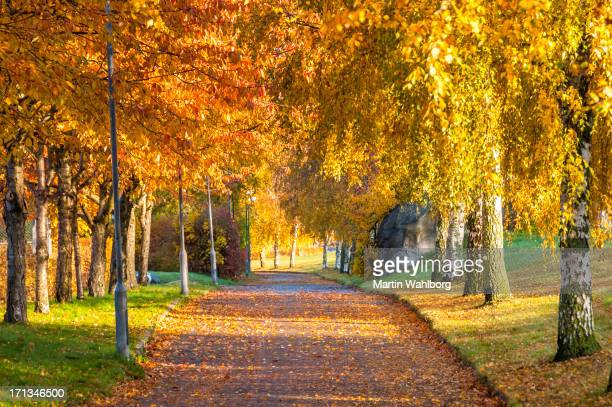 Autumn Bicycle Road