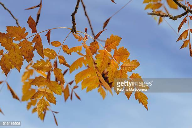 Autumn brach tree