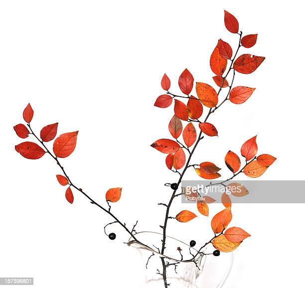 Herbst branch