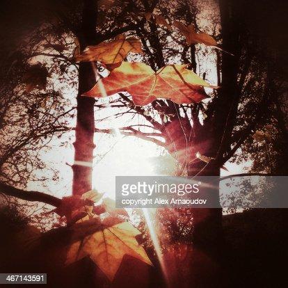 Autumn Burst : Stock Photo