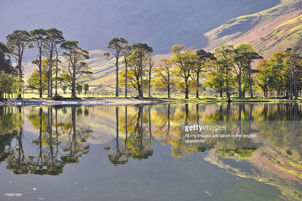 Autumn Buttermere Pines