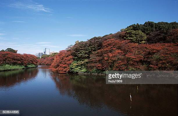 Autumn Chidorigafuchi