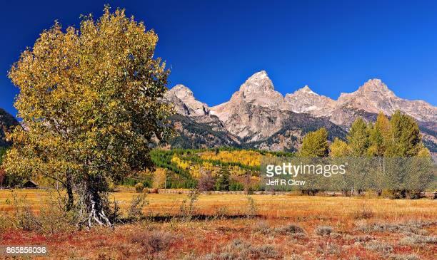 Autumn Color in Grand Teton National Park 8