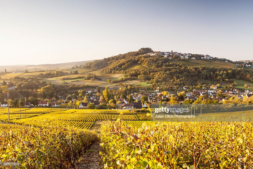 Autumn color in the vineyards of Sancerre, France