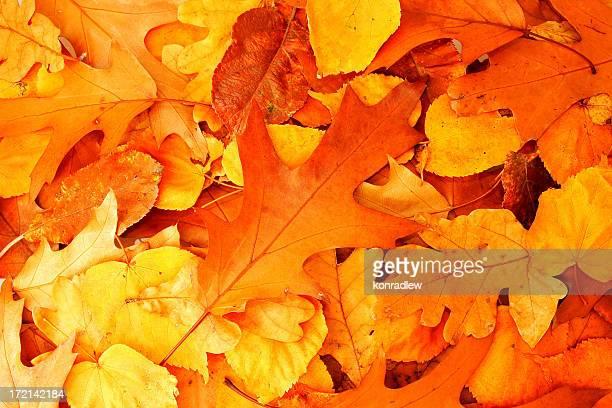 Automne couleur feuilles