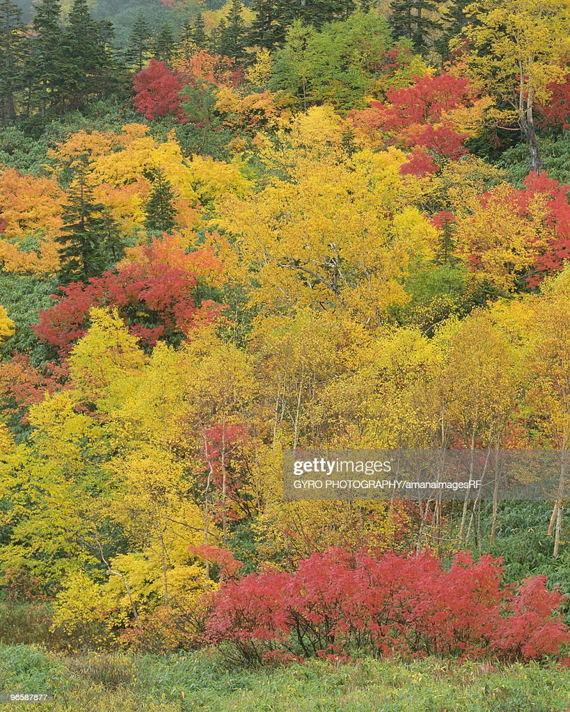 Autumn Color of Leaves