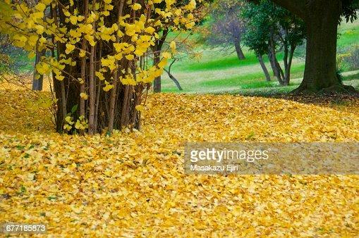 'Autumn Color Series: Red, Orange & Yellow'