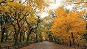 Autumn color tree and fallen leaves cover The MaLL
