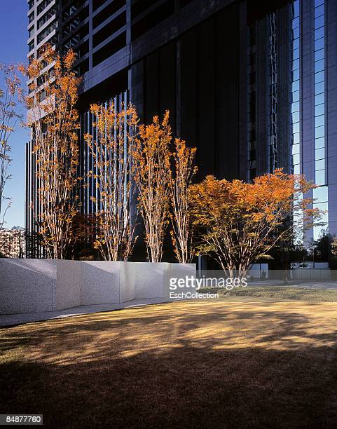 Autumn colored trees in front of large office