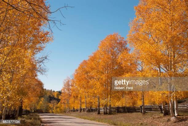Autumn colors along a country road on Cedar Mountain Utah