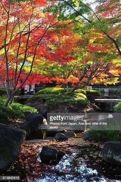 Autumn Colors at Otaguro Park, Tokyo