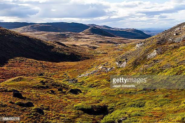 Autumn colors cover a vast tundra valley in the arctic.
