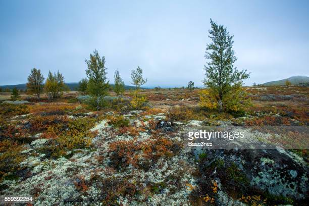 Autumn colors in the mountain (Norway)