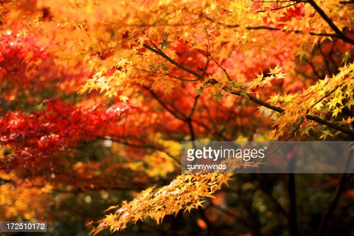 Autumn Colors of Kyoto