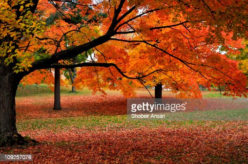 Autumn colors of New England : Stock Photo