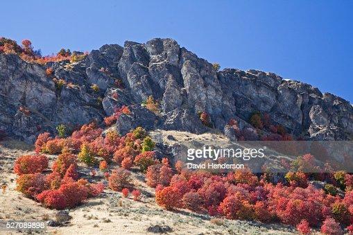 Autumn colors on rocky hillside, Pocatello, Idaho, USA : Stock Photo